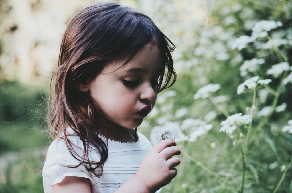 A little girl holding a dandelion, blowing off the blooms.
